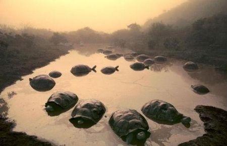 Foto della natura all'asta per l'Earth Day