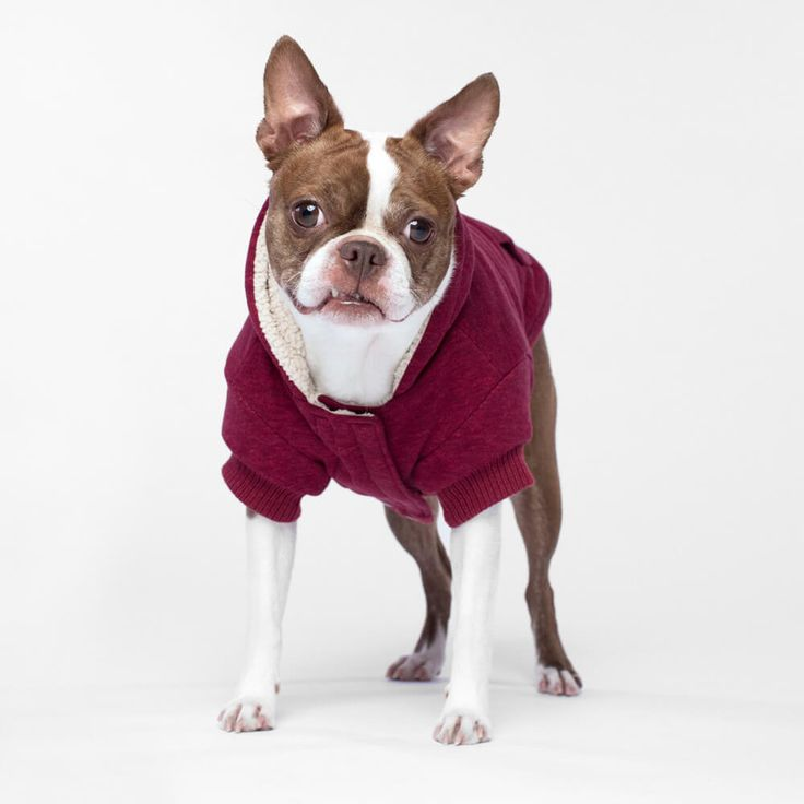Canada Pooch Cozy Caribou Hoodie in Marled Maroon | The ultimate cozy experience: our ultra-soft sherpa lined dog hoodie