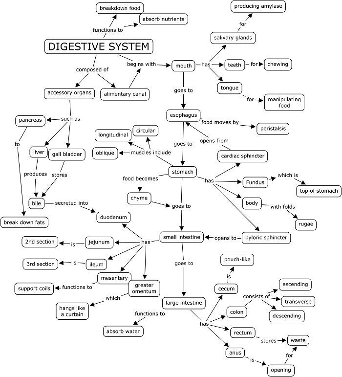 Body Systems Concept Map Answers With Images Digestive System