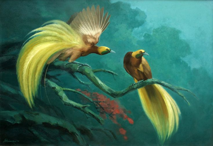 Rsultats de recherche dimages pour bird of paradise paintings