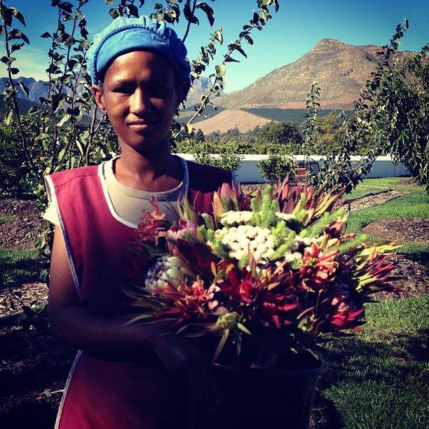 Fynbos bouquet by Fiona Beckett, via Flickr