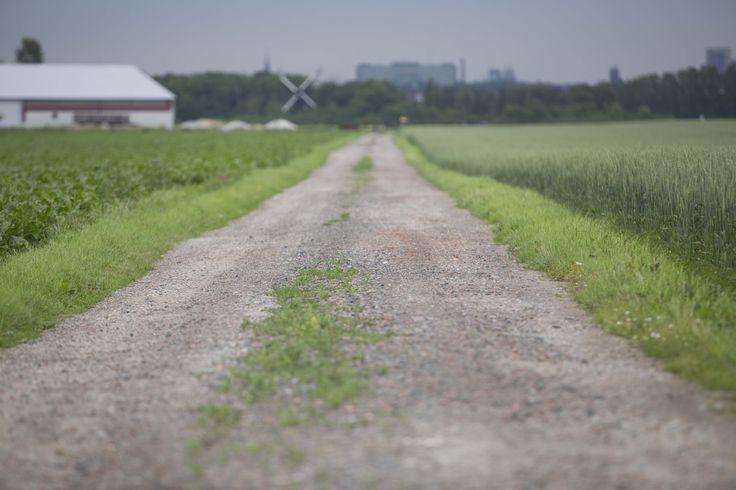 grusväg med kort skärpedjup inga byggnader kommer synas bara grusen och det gröna precis vid modellens fötter