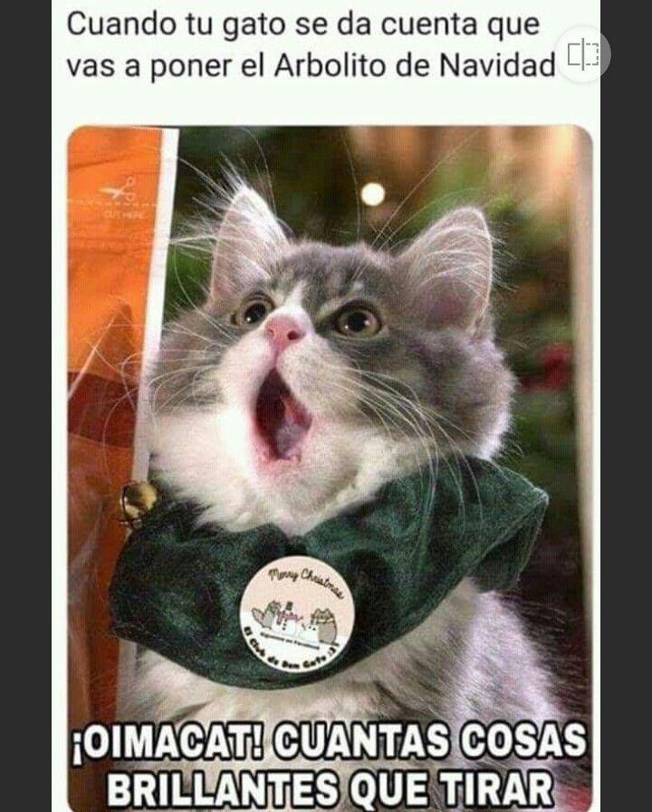 Pin De Yoli Unzueta En Gatos Con Imagenes Meme Gato Perros Navidad Chiste De Gatos