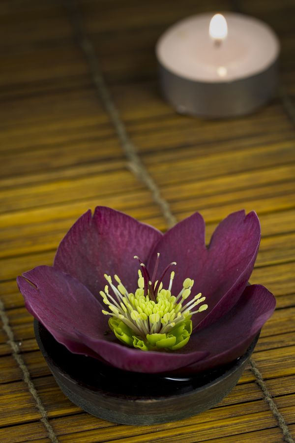 Helleborus 'Anna's Red' • Indoors for a moment, outdoors for a lifetime • Hellebore
