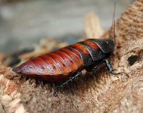 Cockroach....eww, eww, ewww!!
