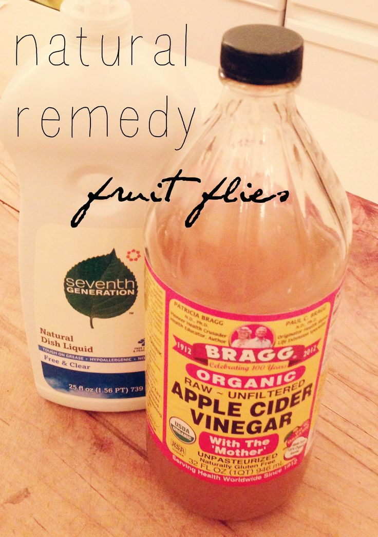 rid your home of fruit flies naturally, easily, & cheaply
