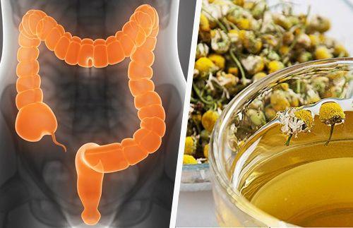 Erbe medicinali per depurare il colon:1. L'anice,2. La menta,3. La camomilla,4. L'infuso di finocchio,5. L'infuso di timo,6. Il dente di leone,