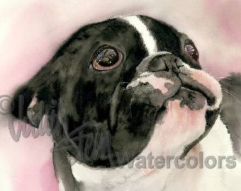 """French Bulldog, AKC Non Sporting, Pied, Black White, Pet Portrait Dog Art Giclee Watercolor Painting Print, Wall Art, Home Decor, """"Who, Me?"""""""