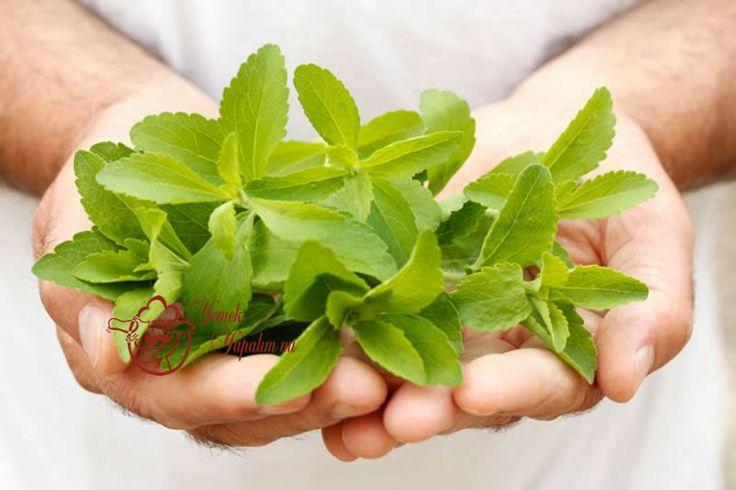 Stevia Bitkisi (Şeker Otu) Ve Faydaları