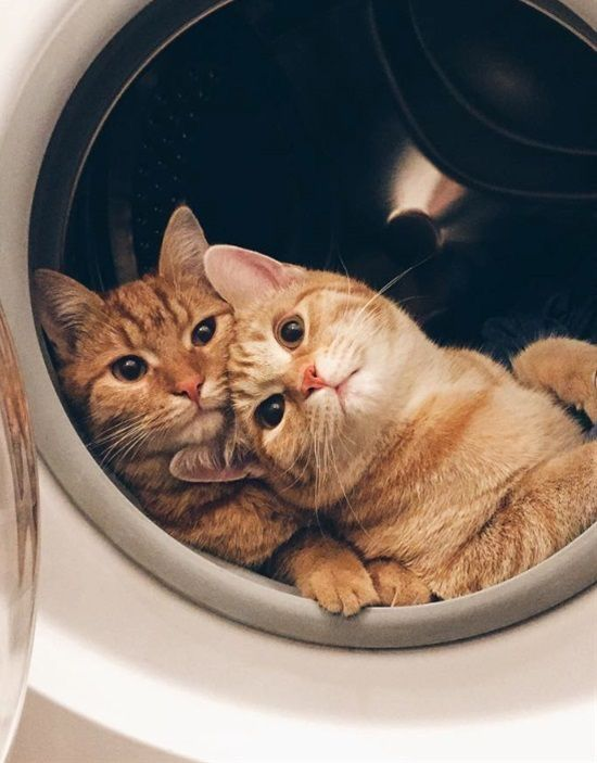(notitle) – cats
