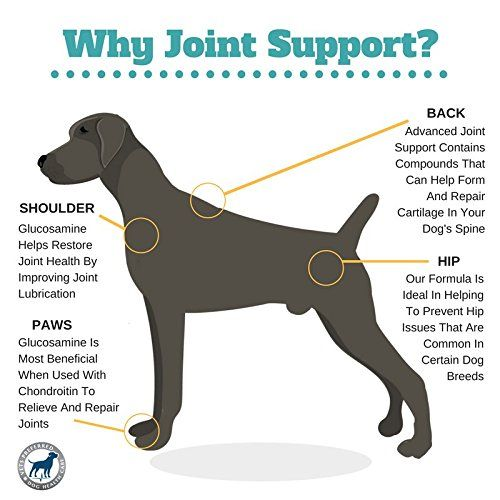 All New Advanced Joint Support Premium Veterinarian Grade Dose Of Glucosamine Chondroitin And Msm J Dog Joint Supplement Dogs Joint Supplements For Dogs