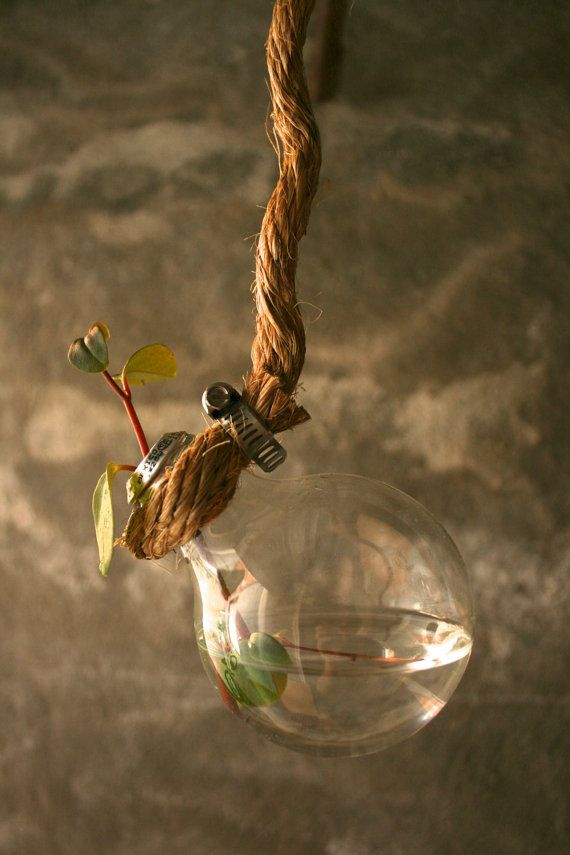 Another hanging vase idea, this time using an old lightbulb! It looks like you just saw off the very bottom of the lightbulb.