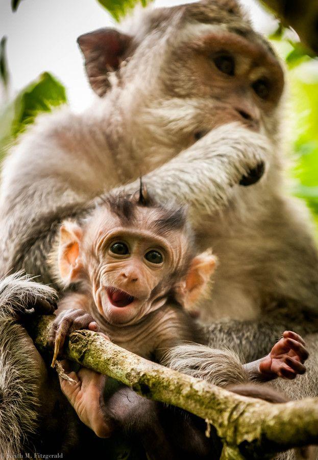 Little Macaque in bali www.facebook.com/placesbali