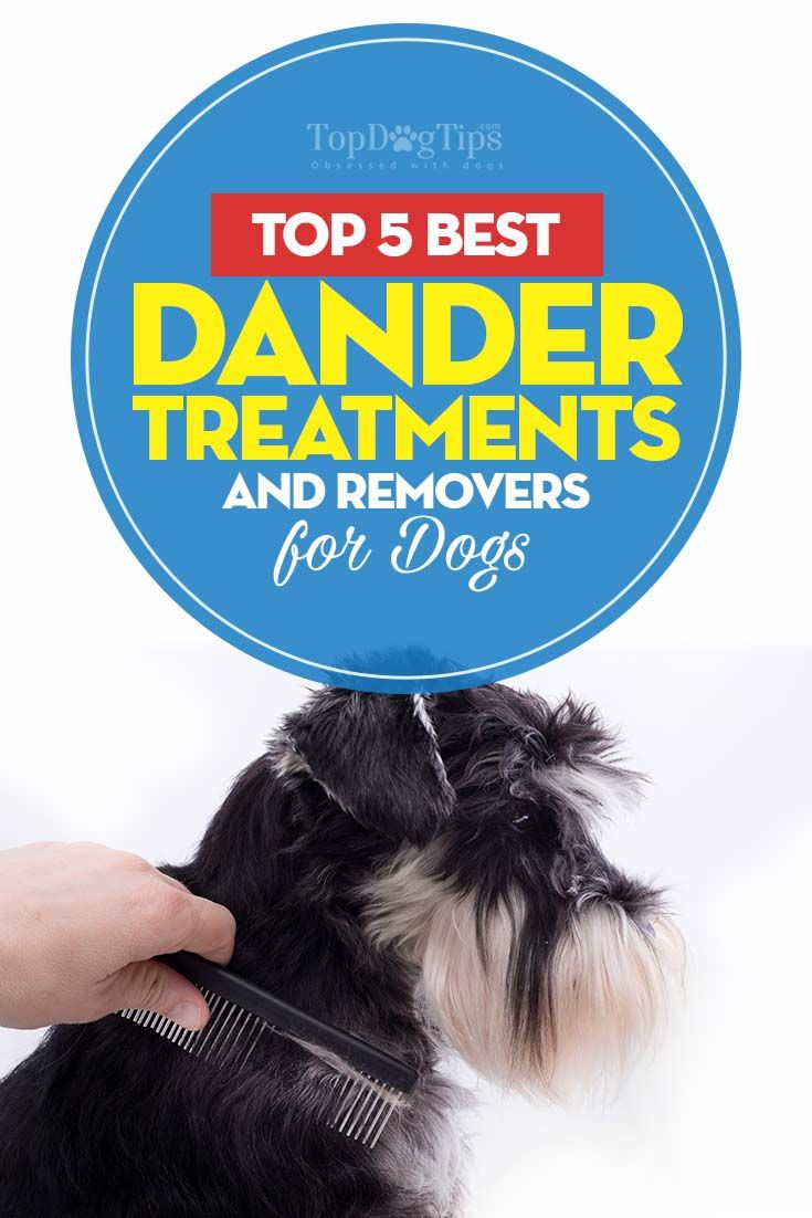 The 5 Dog Dander Treatments For Allergy Sufferers Dog Allergies Remedies Dog Allergies Pet Allergies