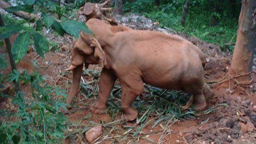Petition · Chief Wildlife Warden of Kerala: Please release elephant Shekharan to a sanctuary · Change.org