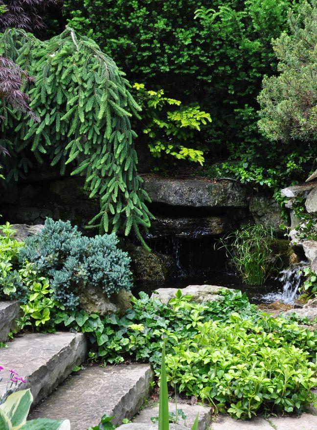 Garden Design For Dogs 447 best garden border inspiration images on pinterest | gardens