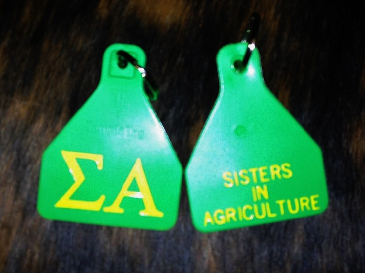 Sigma Alpha Ear Tags Need to have a sister night and design out own!!