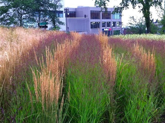 Cool designs with ornamental grasses – Toronto Gardens