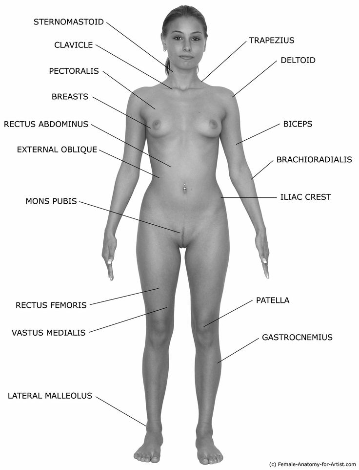305 best anatomy 1 images on Pinterest | Human anatomy, Artistic ...