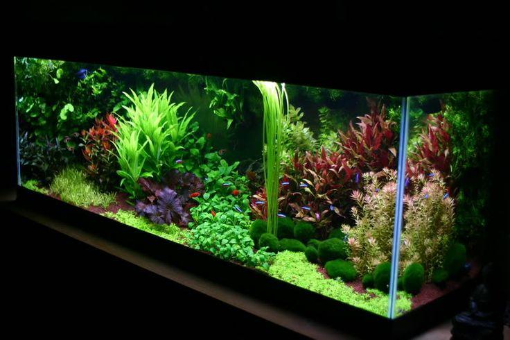 ... this dutch aquascape? - Page 5 - Aquascaping - Aquatic Plant Central