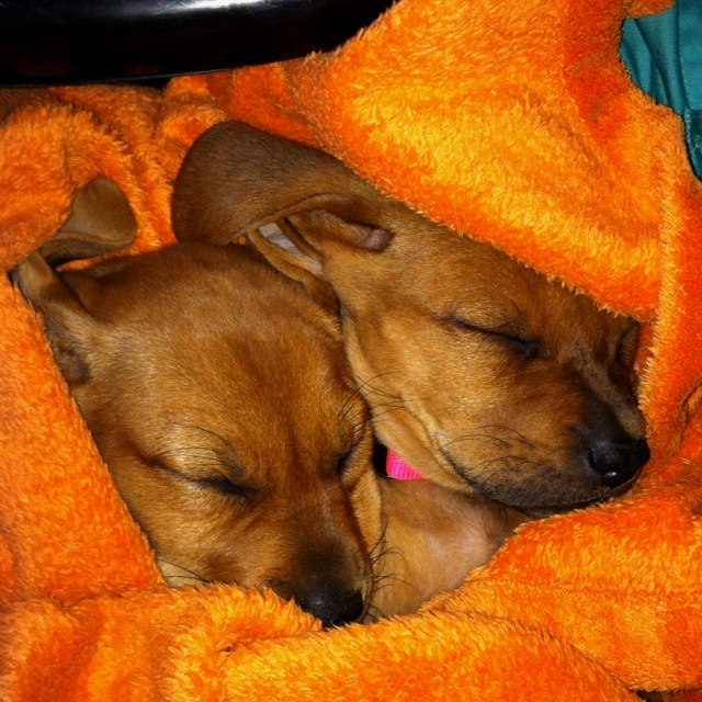 Puppies in a blanket!: Blanket