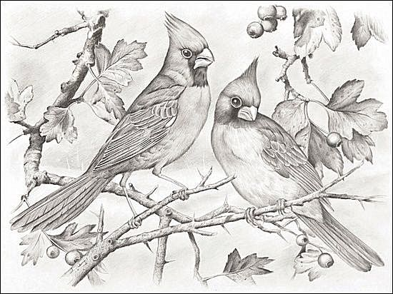 Pin On Bird Printables