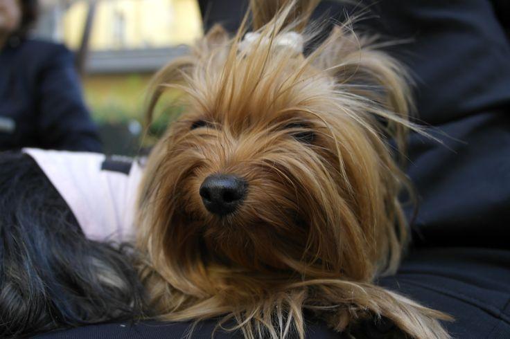 #aperitivo6zampe al @BWCappelloDOro di #Bergamo #aperitivo6zampe è un' iniziativa del BW Cappello d'Oro e di Animal House Milano svoltasi il 15 maggio 2014. #pets #animali #hotel