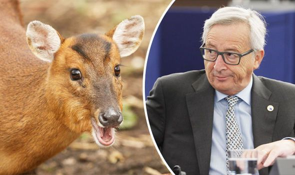 "Jean-Claude Juncker European Union deer environment. Stupid EU again. This is typical of the kind of thing we have had to put up with for decades now. Bent Bananas, labelling of Swedes and Turnips since they are two thick to know the difference. What next I wonder. They ban what they deem as ""none native"" species, but allow every Tom, Dick and Harry in if they are human. This Tower of Babel must fall soon."