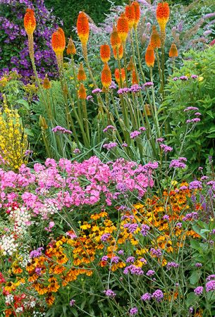 The end of long border at Great Dixter. Kniphofia uvaria 'Nobilis', phlox, verbascum, verbena bonariensis, clematis jackmanii 'Superba' and helenium 'Moorheim Beauty'. Photograph by Jonathan Buckley.