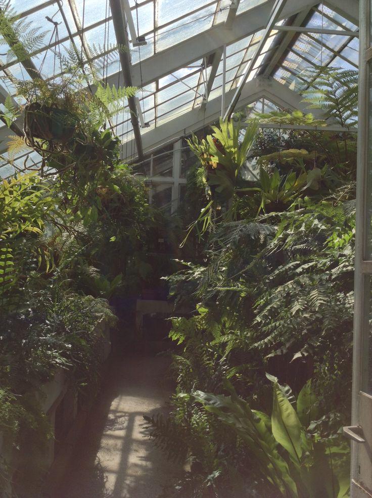 Giardino Botanico di Cracovia - Per chi ha la fortuna di avere una propria serra tropicale! Che bello!