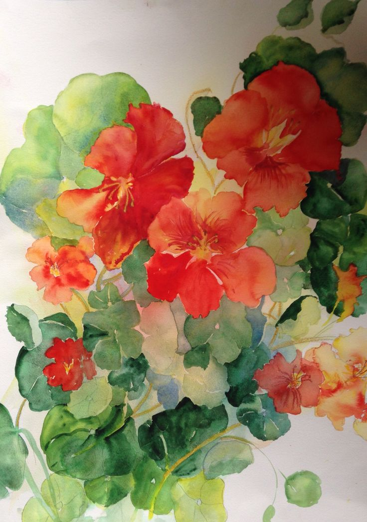 Nasturtiums..watercolour