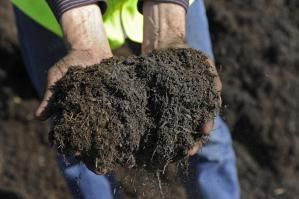 Hands holding Compost - Matthew Brown/E+/Getty Images