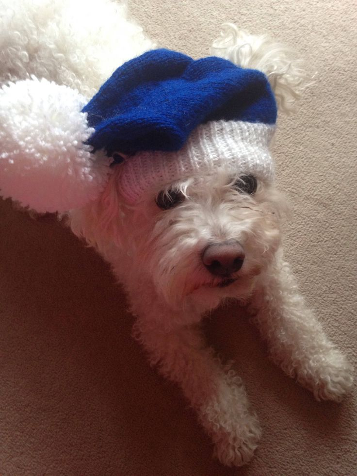 Excited to share the latest addition to my #etsy shop: Blue dog hat with Pom Pom- Everton-EFC-Chelsea FC-photo prop- dog lovers gift- The Toffees #newyears #pets #chelseafc #efcsupporters #dogbobblehat