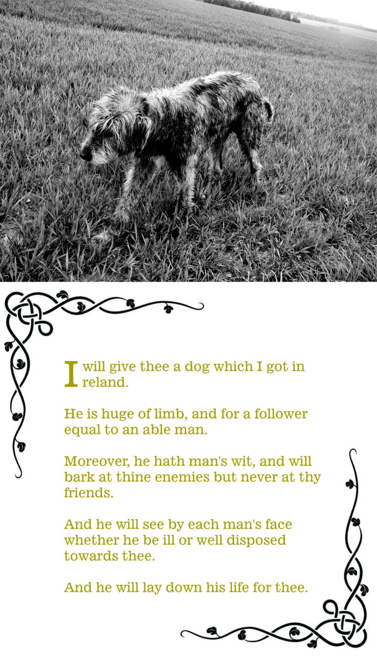 A very old quote about Irish Wolfhounds, their disposition, their size and their courage.