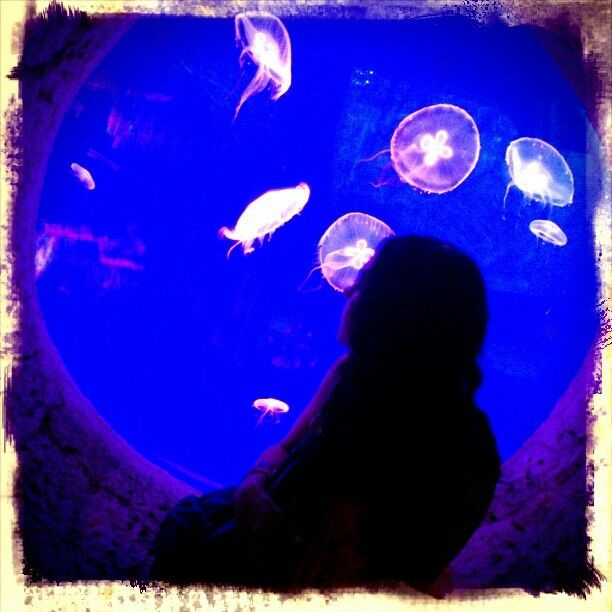 #Jellyfishes #Xcaret #QuintanaRoo #Mexico