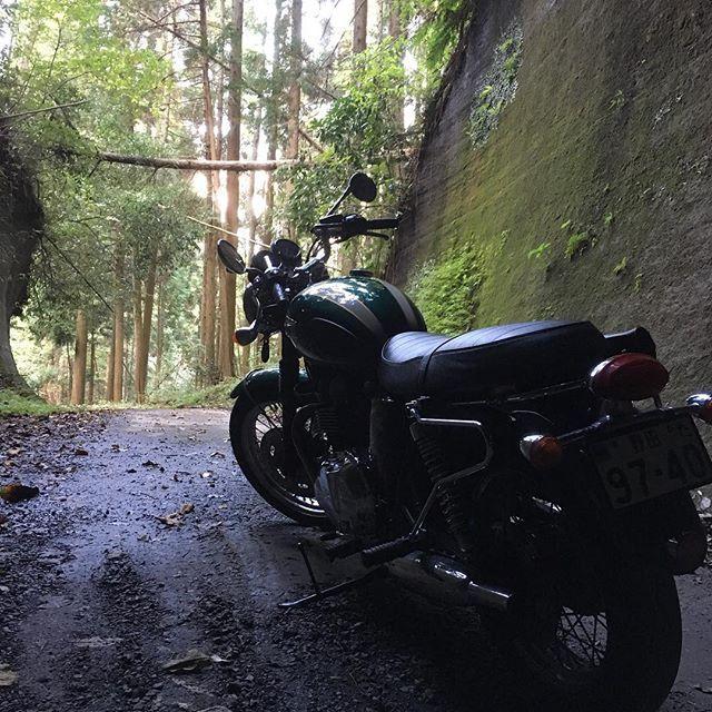 【nobuyuki8686】さんのInstagramをピンしています。 《#バイク #トライアンフ#ボンネビル #林道#トンネル #千葉#房総 #ツーリング #triumph #bonneville #バイクが好きだ #instagood #likeforlike#自然#森#バイクのある風景 #l4l #follow4follow #followforfollow #japan#biker #nobikenolife》