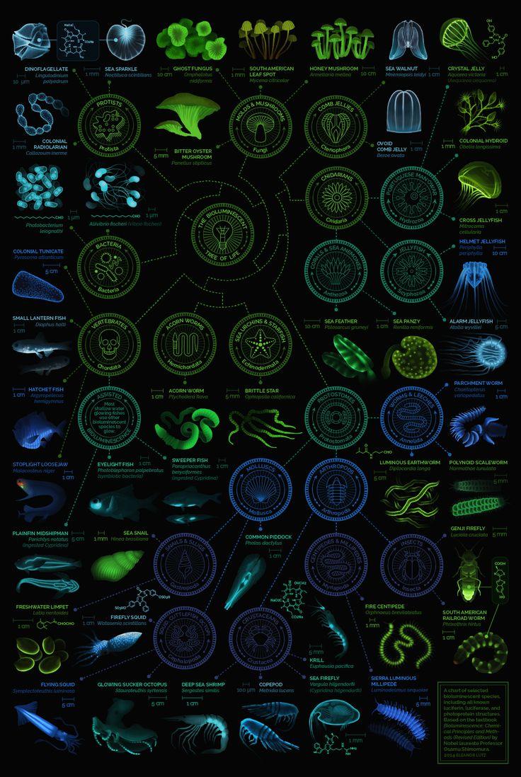 infographie lumiere aorganisme infographie lumiere aorganisme