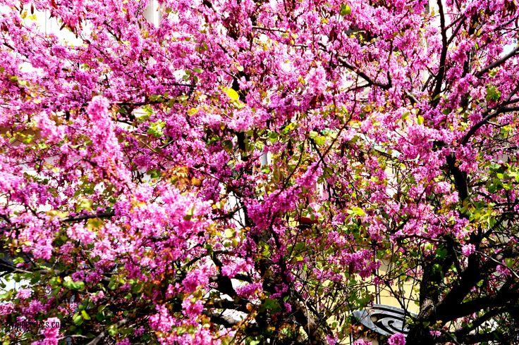 Απρίλιος // april in Athens