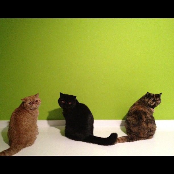 #three #cats