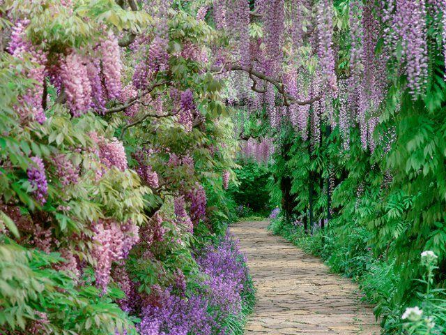 1603 best images about gardens on pinterest gardens - Garden screensavers free ...