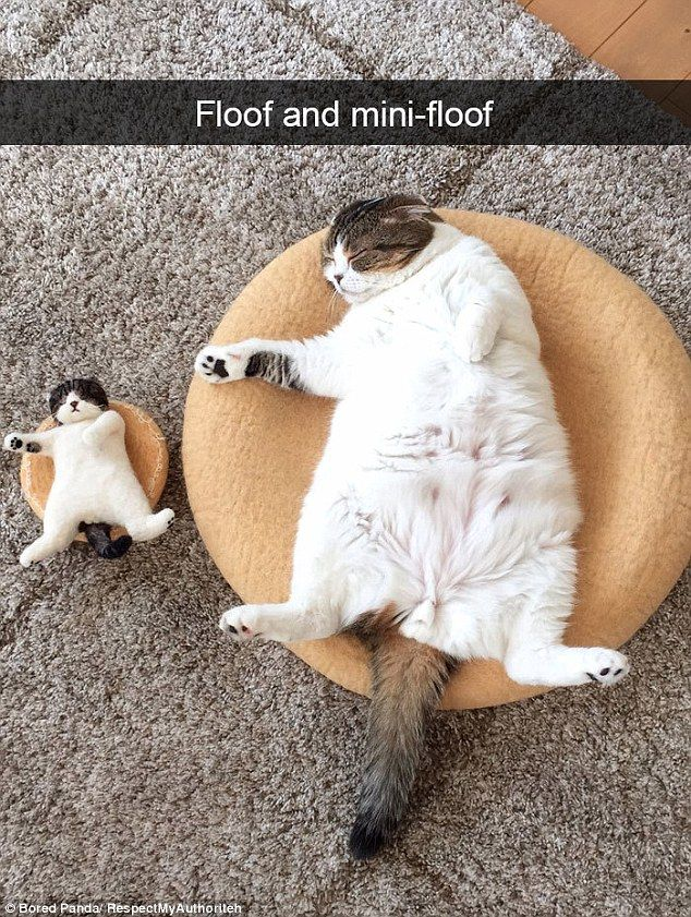 Here Are Some Of The Best Cat Memes To Make You Purr Cats On Catnip