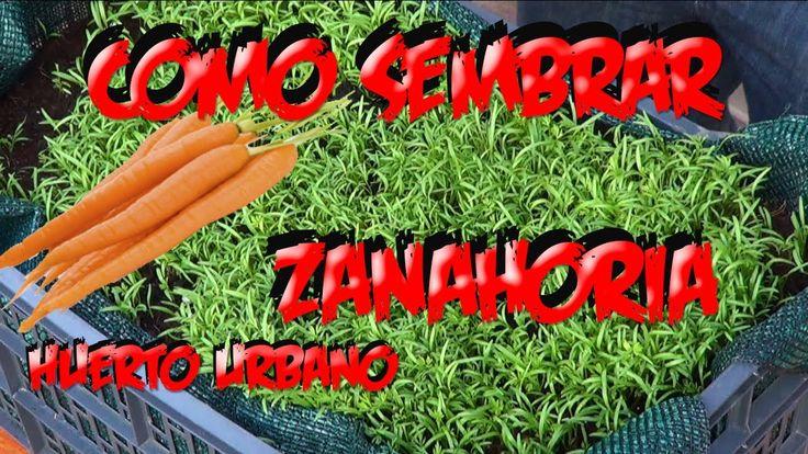 Como sembrar zanahorias en el huerto urbano la huertina - Huerto de urbano ...