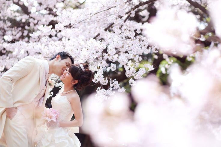 前撮り:桜 pre wedding photo : SAKURA   こだわりの結婚式の写真&撮影 フォトウェディングのcocoFLEUR