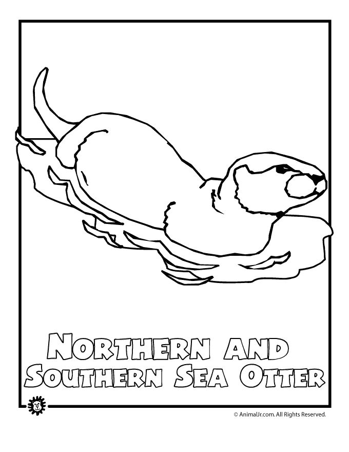 North American Animals Coloring Pages Endangered Sea Otter