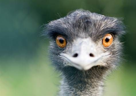 Ostrich | Hefty, ostrich-like dino found in China - Technology & science ...