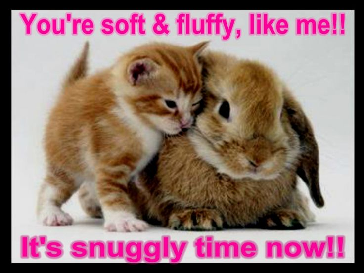 Cute Animal Pictures With Funny Sayings
