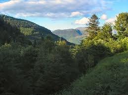 Lakeland forest trails