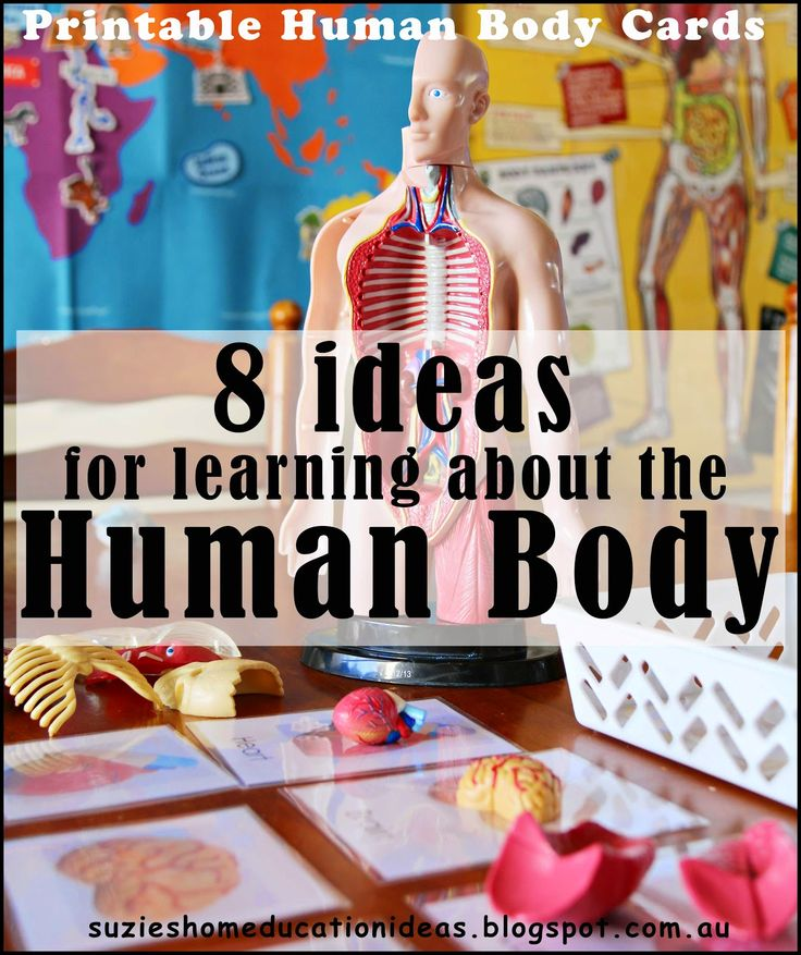 Suzie's Home Education Ideas: 8 Ideas for learning about the Human Body