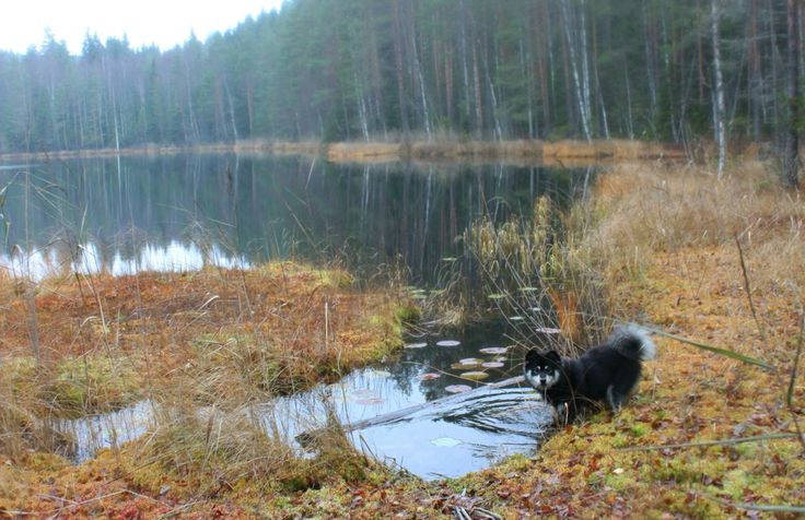Two-day length outdoor adventure, the best birthday present for a dog.