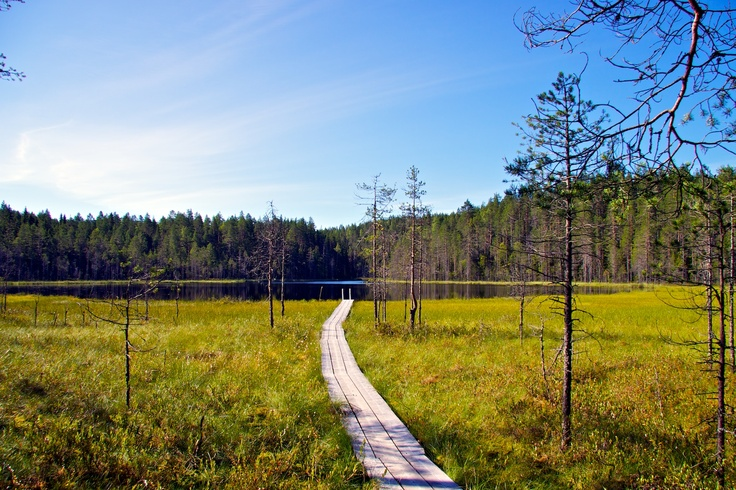 Beatiful landscape in Kainuu